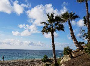 palm trees pacific ocean thousand steps beach laguna beach ca